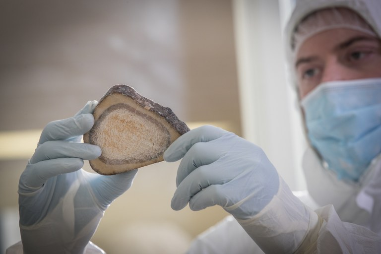 Graduate student Emil Karpinski holds a tibial cross section from a Siberian Woolly Mammoth. This permafrost preserved sample still contains fat entombed marrow. Credit: JD Howell, McMaster University